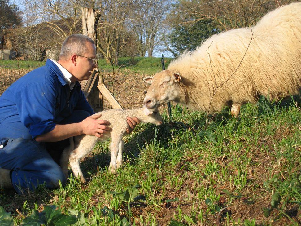 Un frère amène un agneau à une brebis.