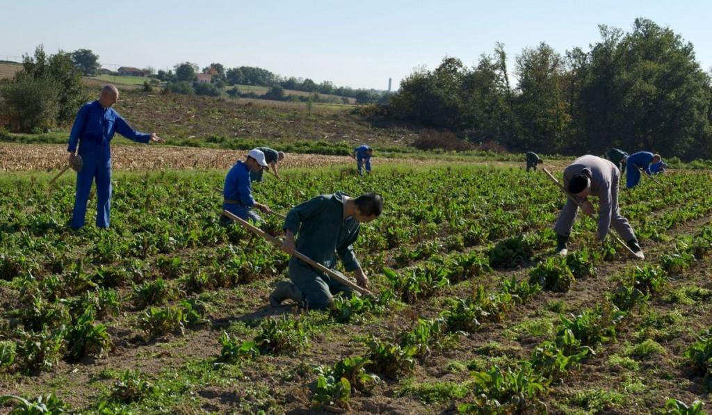 Communauté en travail dans le champ de tisane