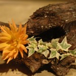 détail de bouquet, fleur jaune sur sep de vigne