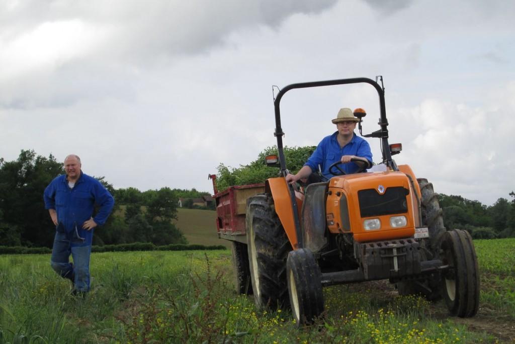 Le tracteur emporte les pieds de tisane fraichement coupés.