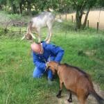 Un frère caresse une chèvre tandis qu'une autre est debout sur ses épaules.