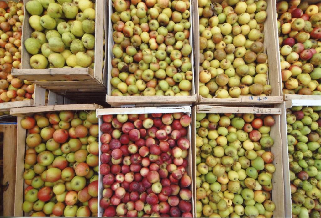 Cageots de pommes de diverses espèces, vus de dessus.