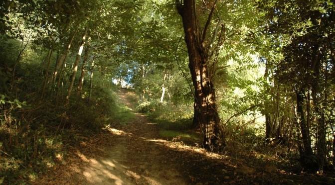15<sup>e</sup> semaine : Sur les chemins de Dieu