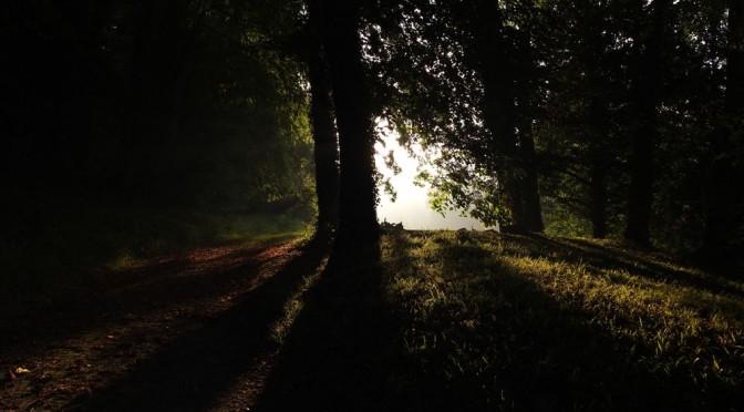 27<sup>e</sup> dimanche : Vivre et grandir dans la foi