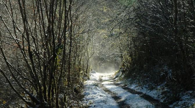 Chemin forestier enneigé et baigné de soleil