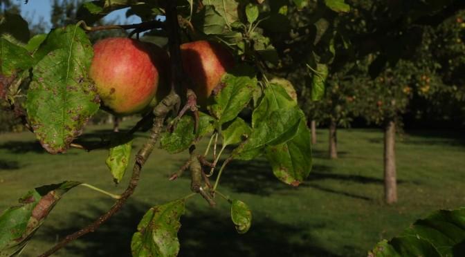 24<sup>e</sup> dimanche : Le fruit de la Miséricorde