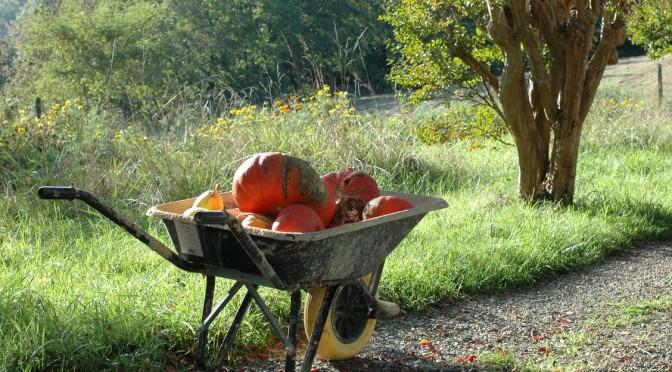 27<sup>e</sup> dimanche : La joie du fruit porté