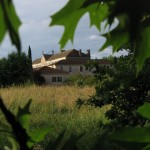 On aperçoit les toitures de l'abbaye entre les feuilles des liquidambars qui agrémentent le jardin de l'hôtellerie.