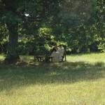 Un moine parlant avec un hôte à l'ombre d'un chêne d'Amérique.