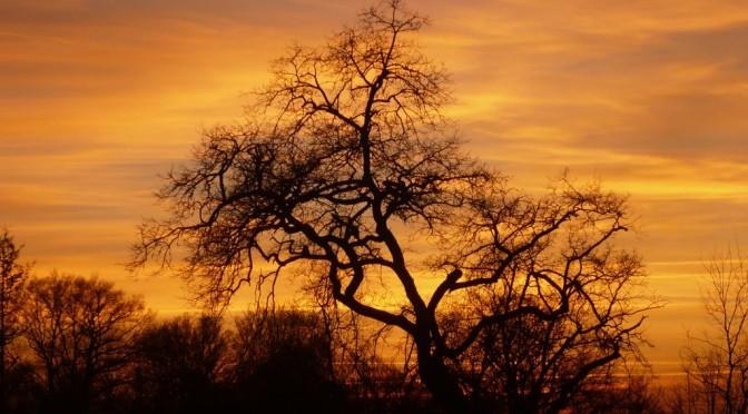 Un arbre effeuillé sur fond de ciel coloré aux multiples nuances de jaunes par le soleil couchant.