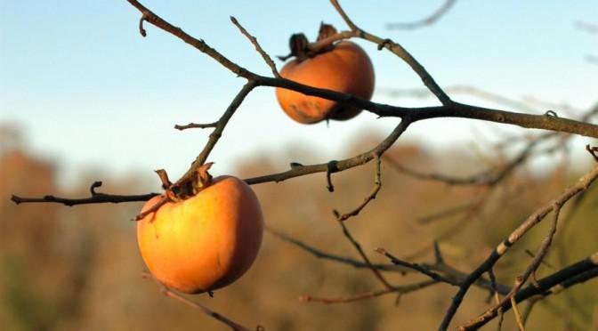 8<sup>e</sup> semaine : Le fruit de l'amour